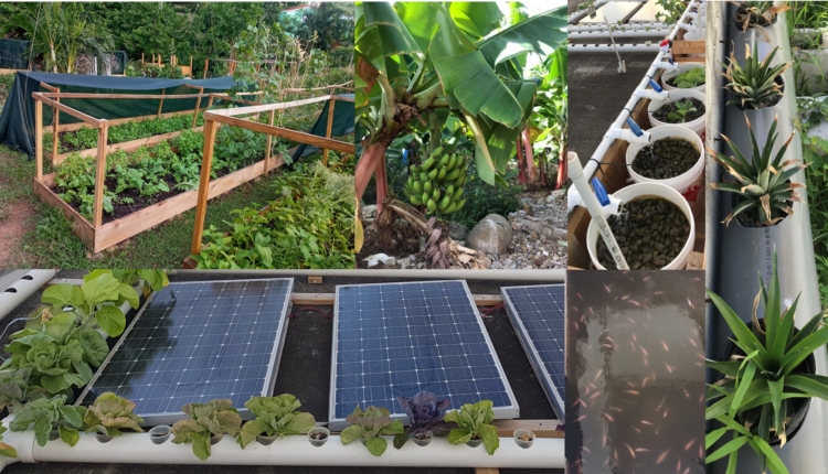 Help us build a sustainable and resilient agricultural economy on Sint Maarten