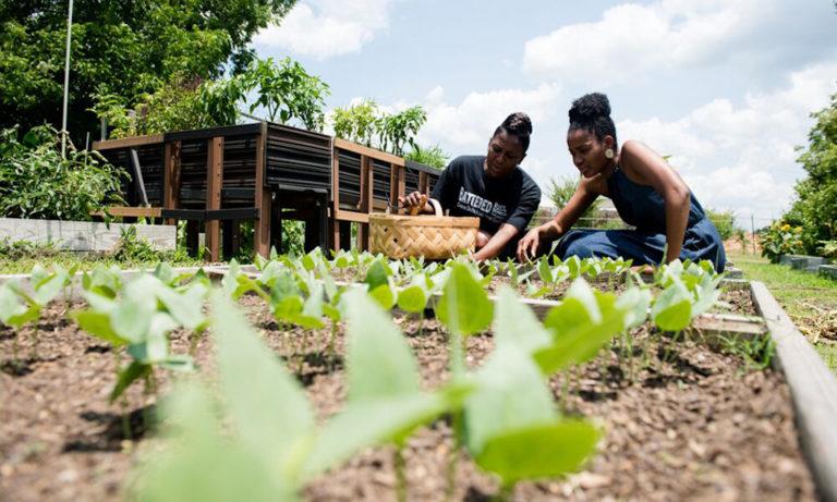 Food Farm Gardens Association